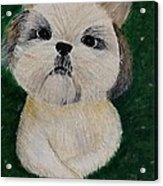 Pet Dog Acrylic Print by Kat Poon