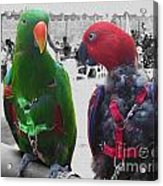 Pet Parrots In A Cafe Acrylic Print