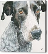 Pet Portrait Dog Art Print Hire Commission Pet Portrait Artist Acrylic Print