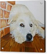 Pet Portrait Great Pyrenees Original Oil Painting On Canvas 10 X 10 Inch Acrylic Print