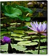 Petal Balancing Act Acrylic Print