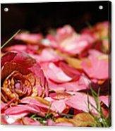 Petals 2 Acrylic Print