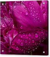 Petals And Drops I Acrylic Print
