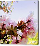 Petals In The Wind Acrylic Print