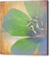 Petals Of Color Acrylic Print