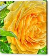Petals Of Sunshine Acrylic Print