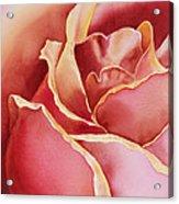 Petals Petals I Acrylic Print
