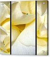 Petals Triptych Acrylic Print