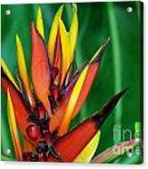 Petals Up Acrylic Print