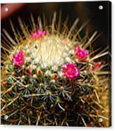 Petite Cactus Acrylic Print