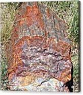 Petrified Stump Acrylic Print