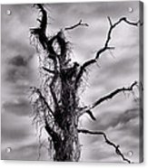 Petrified Tree Acrylic Print