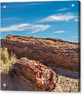 Petrified Wood Acrylic Print