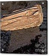 Petrified Wood On A Pedestal Acrylic Print
