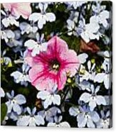Petunia And Friends Acrylic Print