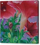 Petunia Skies Acrylic Print
