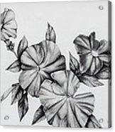Petunias Acrylic Print