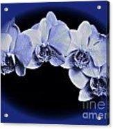 Phalaenopsis 2 Acrylic Print