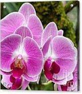Phalaenopsis Orchid Hawaii All Profit Benefit Hospice Of The Calumet Area Acrylic Print