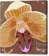 Phalaenopsis Synopsis Acrylic Print
