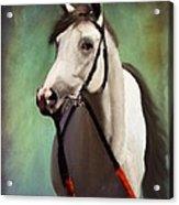 Phantom Lover Race Horce Before The Race Acrylic Print