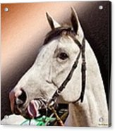 Phantom Lover Race Horse Looking On Acrylic Print