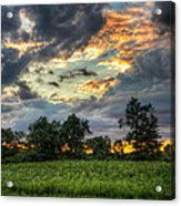 Phantom Sunset Over Sunflower Fields  Acrylic Print