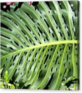 Philodendron 6 Acrylic Print