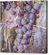 Phil's Grapes Acrylic Print