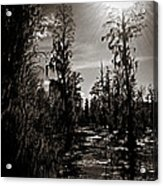 Phinizy Swamp Acrylic Print