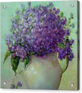 Phlox          Copyrighted Acrylic Print