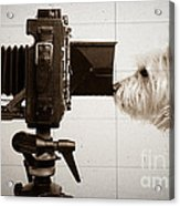 Pho Dog Grapher - Ground Glass View Acrylic Print