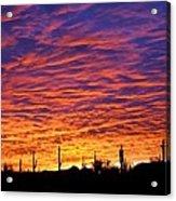Phoenix Sunrise Acrylic Print