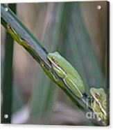 Phyllis Have You Seen The Kids Acrylic Print by Kathy Gibbons