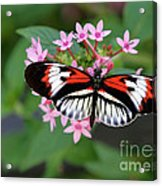Piano Key Butterfly On Pink Penta Acrylic Print