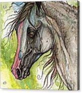 Piber Polish Arabian Horse Watercolor Painting 3 Acrylic Print