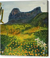 Picacho Poppies Acrylic Print