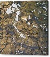 Pickerel Fish Run In Stream Acrylic Print