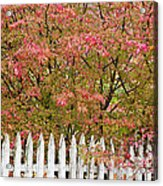 Picket Fence Fall Acrylic Print