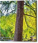 Picnic By The Cypress Acrylic Print
