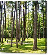 Picnic In The Pines Acrylic Print