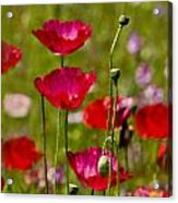 Picture Perfect Too Acrylic Print
