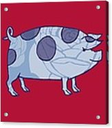 Piddle Valley Pig Acrylic Print