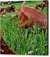 Pieces In The Lawn Acrylic Print