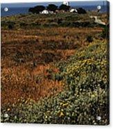 Piedras Blancas Lighthouse Acrylic Print
