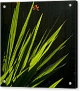 Piercing Green Acrylic Print