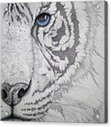 Piercing II Acrylic Print