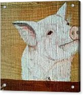 Pig Smile Acrylic Print