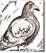 Pigeon I Sumi-e Style Acrylic Print