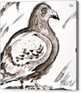 Pigeon II Sumi-e Style Acrylic Print